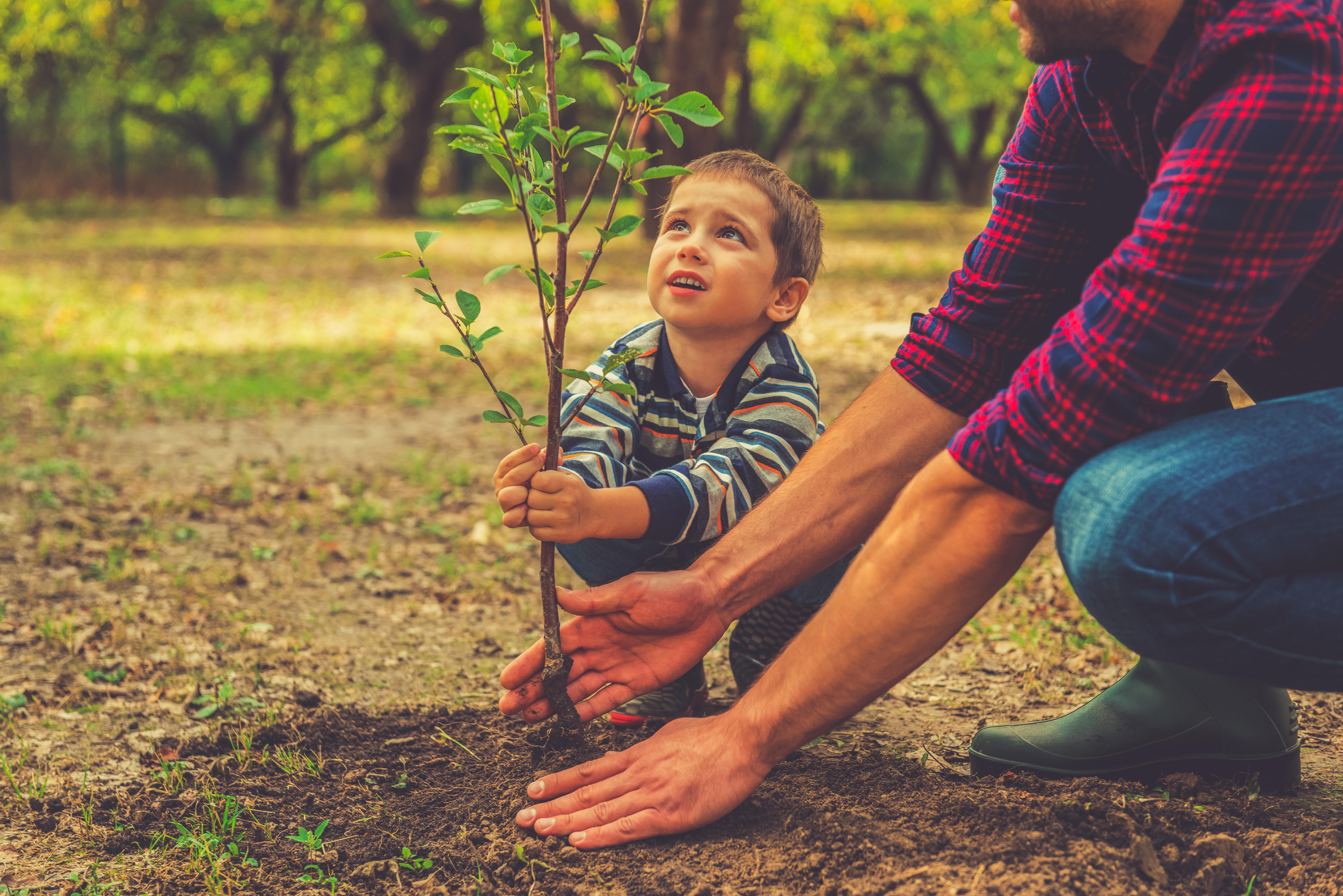 Un enfant plante un arbre avec l'aide d'un adulte